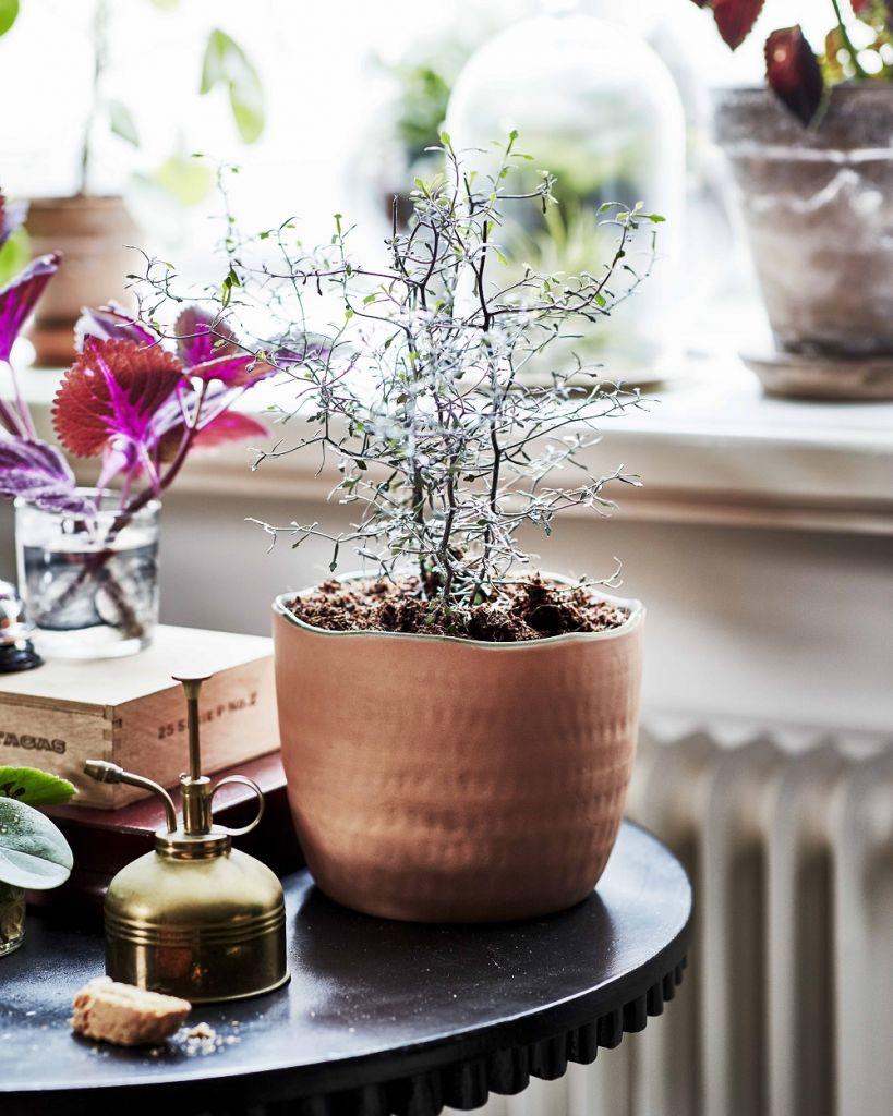 ikea-coleccion-botanisk
