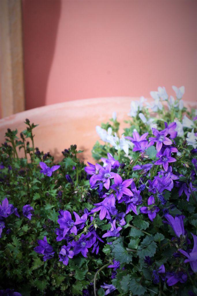 huerto-lo-que-estoy-cultivando-en-mi-jardin